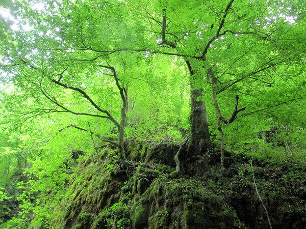Urwälder Europas